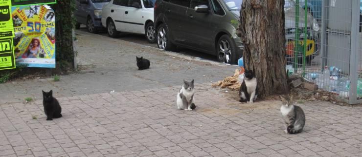 tel-aviv-cats-sidewalk