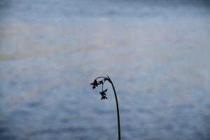 flowers by water vallejo
