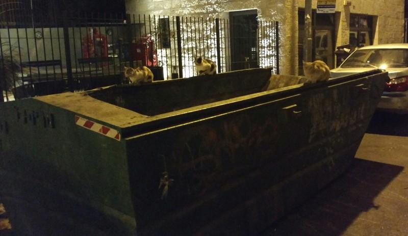 jerusalem cats in garbage