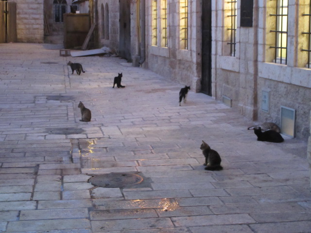 cat patrol jerusalem