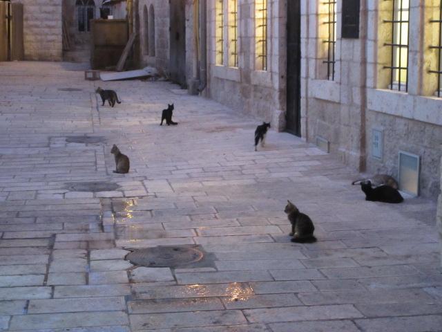 cat patrol jerusalem