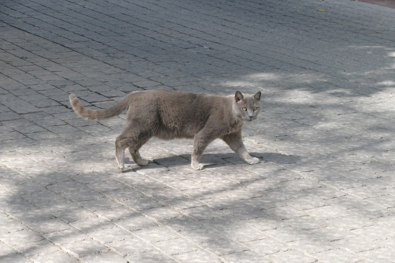 grey cat with green eyes in tel aviv