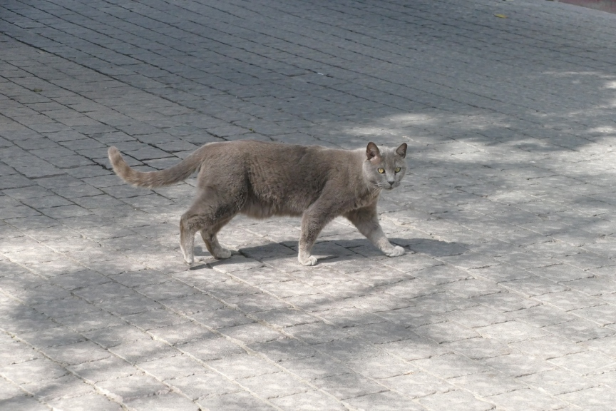 grey cat with green eyes in tel aviv