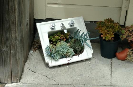 flowers in sink
