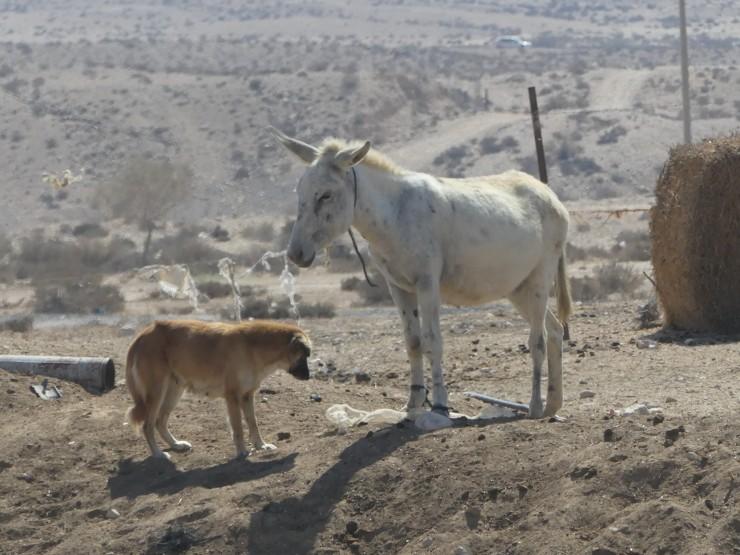 pony and dog